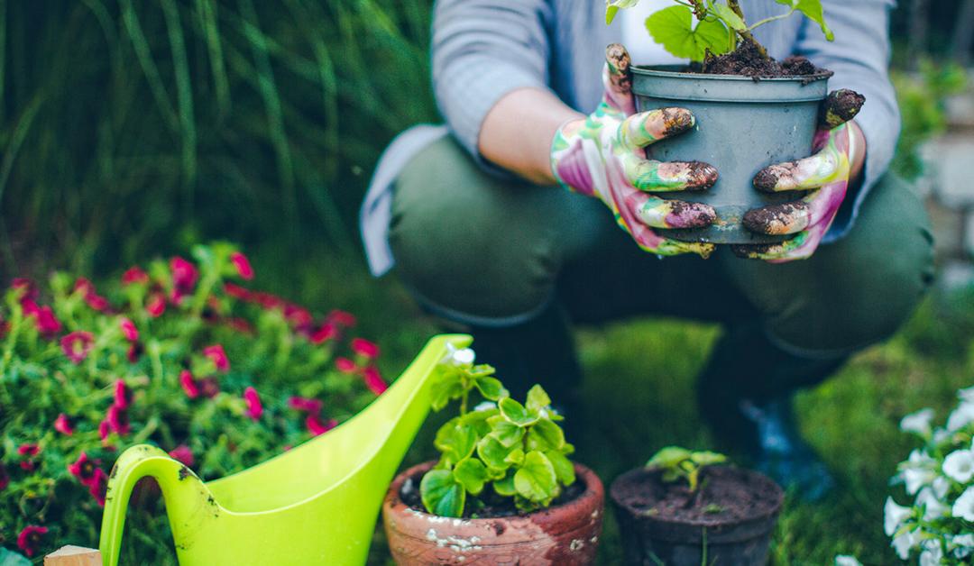 Conseils : préparer son jardin en mars